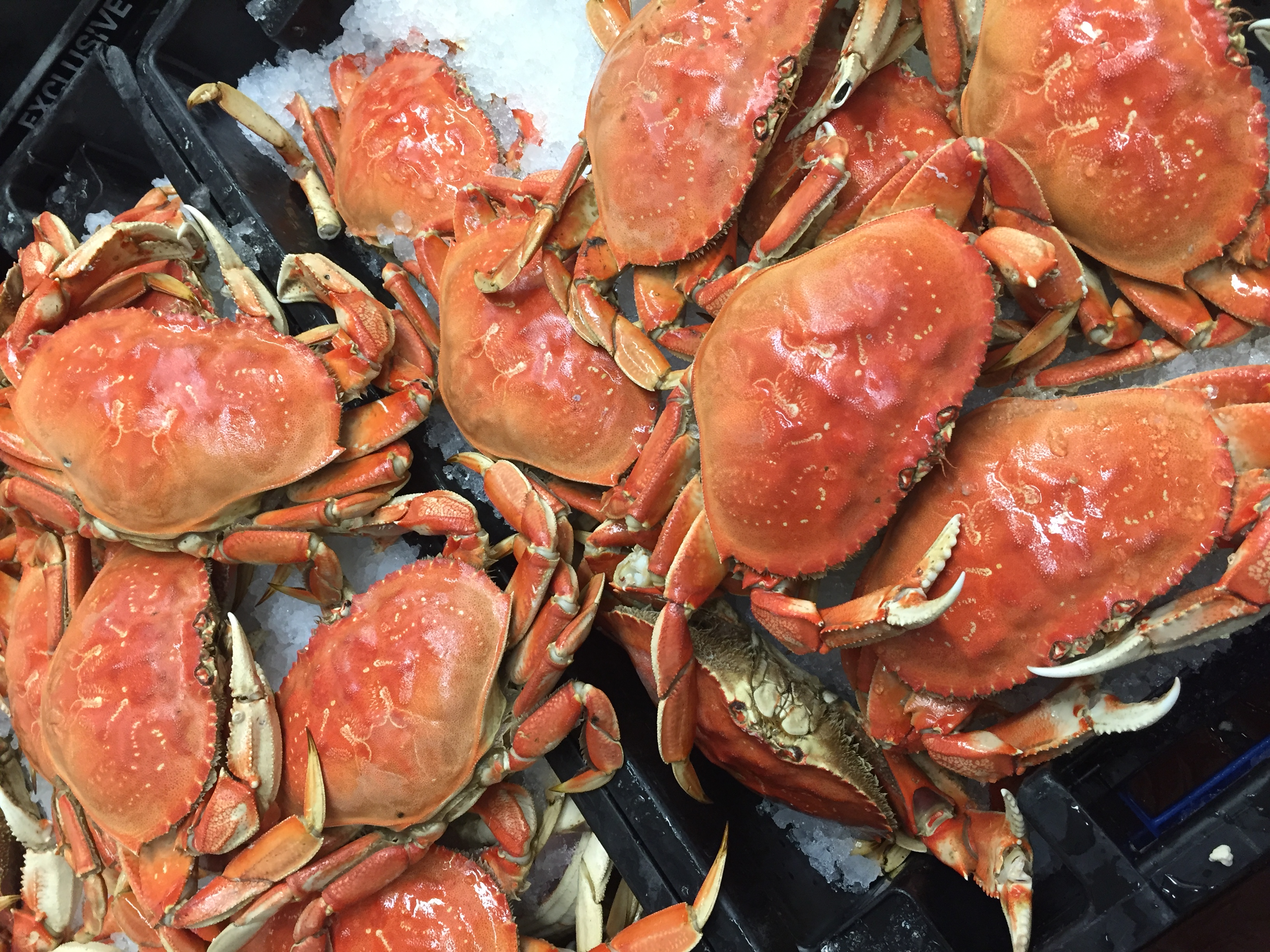 Image result for Dungeness Crab fisherman's wharf