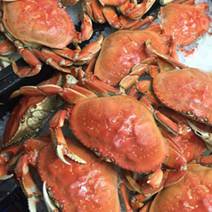 crab regular 324x324 1